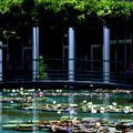 Photos: 睡蓮の庭
