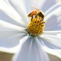 花とミツバチ
