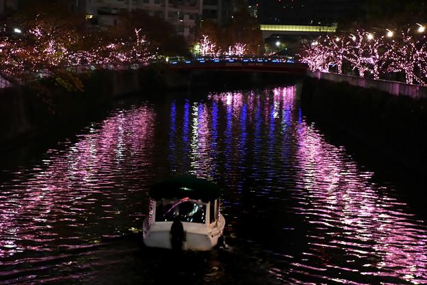 冬の桜イルミ