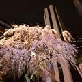 Photos: 大都会に咲く2