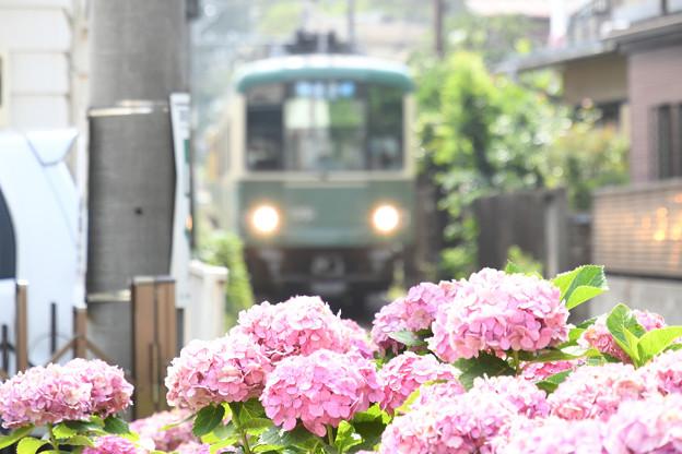 江ノ電×紫陽花