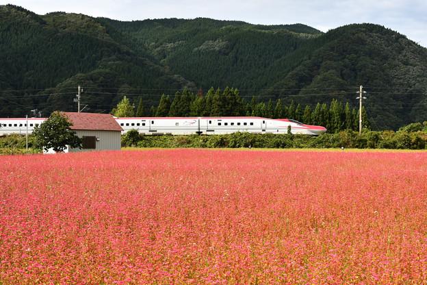 Photos: 赤い新幹線