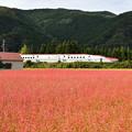 赤い新幹線