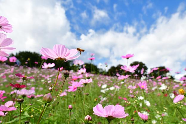 蜜蜂パラダイス