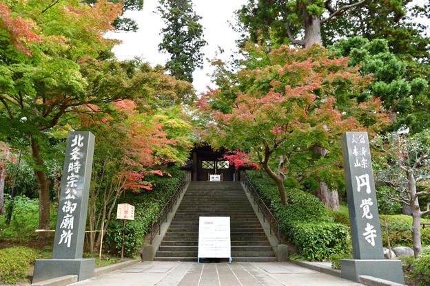 今朝の円覚寺