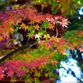 Photos: 虹色