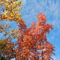 秋の始まり。