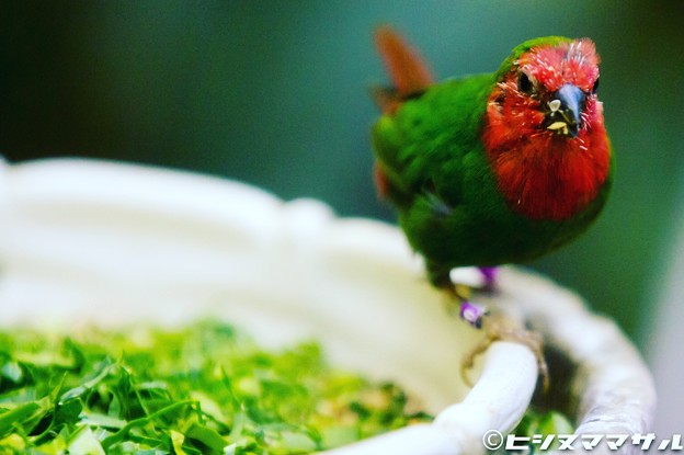 Photos: 色鮮やかな鳥 01
