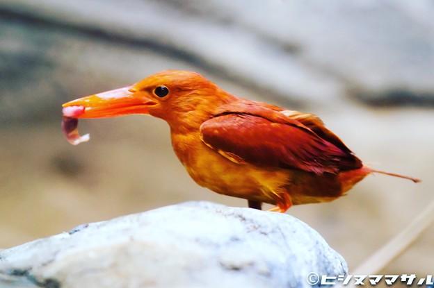 色鮮やかな鳥 02