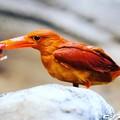 Photos: 色鮮やかな鳥 02