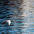 写真: 水鳥 02