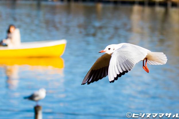 水鳥 03