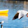 写真: 水鳥 03