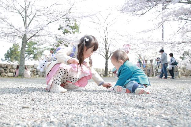 私と僕と桜と