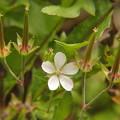 写真: 花とお飾りP9183743s