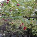 写真: ツリバナ709turibana