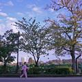 写真: アキニれの道786sc