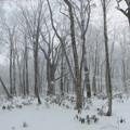 Photos: 玉原の森417c2_stitch