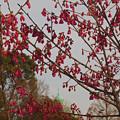 Photos: 寒緋桜1047kanhizakura