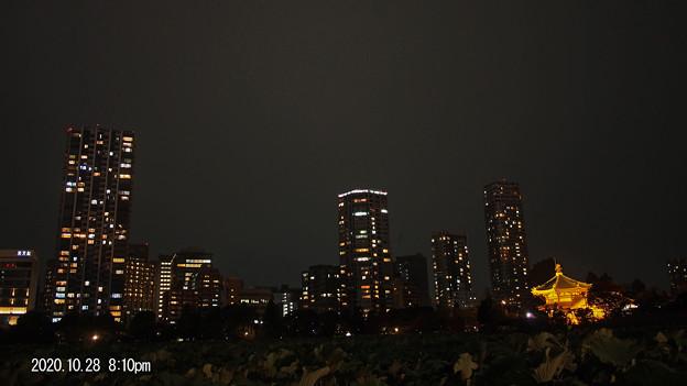 夜の不忍池_0524yoru