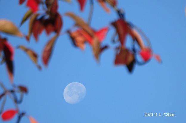 桜と月_124tuki