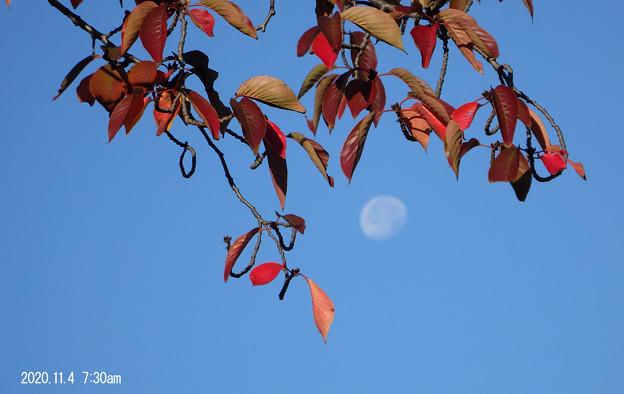 月と桜104_114tuki