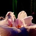 Photos: 桜貝の詩