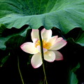 写真: 緑傘の麗人
