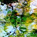 写真: 光と水の幻想