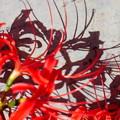 写真: 赤い影