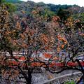 写真: 秋飾る彩