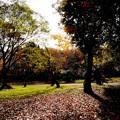 写真: 眩しい秋