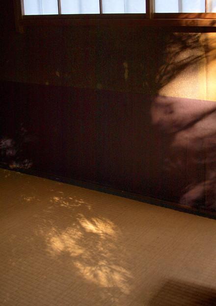 Photos: 幽玄な光