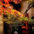 Photos: 坪庭の飾り