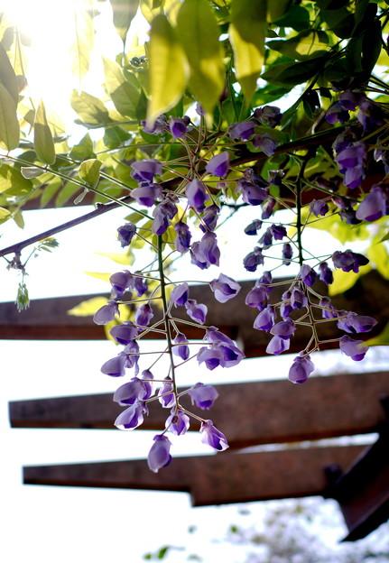 春陽と木陰