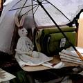 Photos: 陽傘