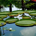 緑彩の円卓