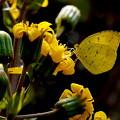 Photos: 誘う花