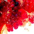 Photos: 艶やかな薔薇色