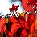 Photos: 花水木の実
