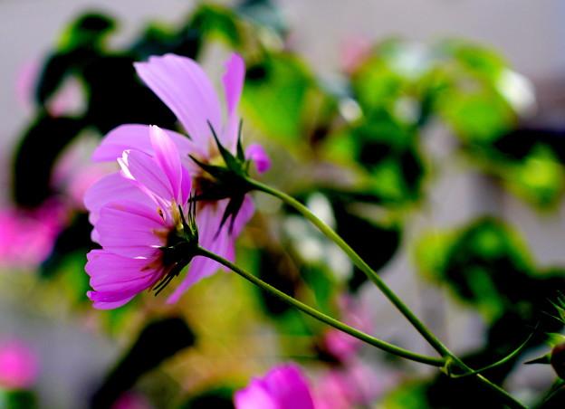 Photos: 双華秋光