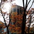 Photos: 気だるい午後の陽