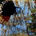 Photos: 水ぬるむ