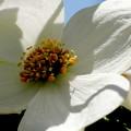Photos: 咲きはじめた
