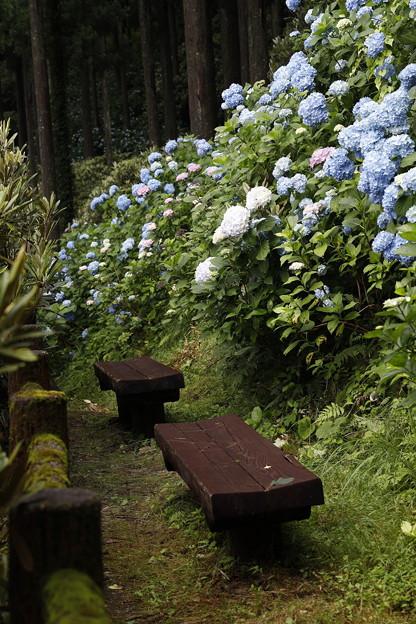 Photos: 20200712花園あじさい園a8