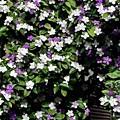 写真: お花でいっぱい!