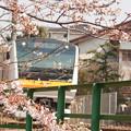 写真: 桜と南武線2