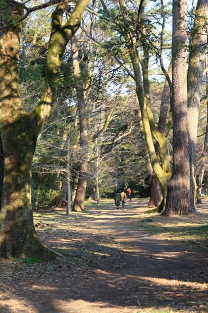 森もある京都御苑