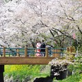 写真: 桜の下で♪