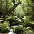 写真: 精霊たちの住む森